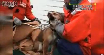 110406_救助された犬