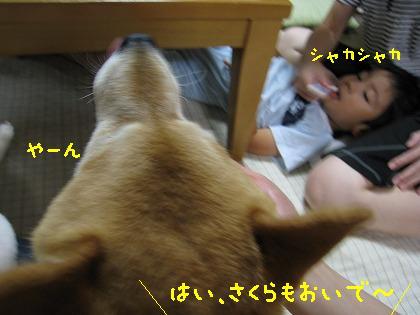 IMG_8240-2.jpg