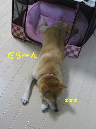 IMG_8747-2.jpg