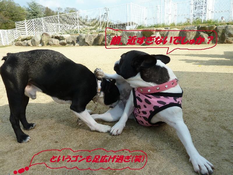16_20110427175919.jpg