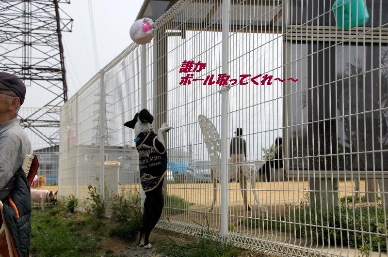 17_20110506093611.jpg