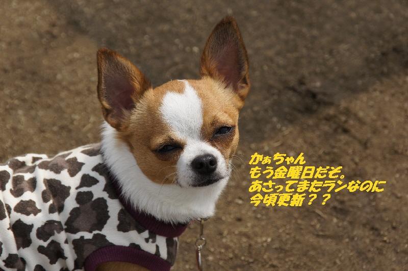 1_20110506093332.jpg