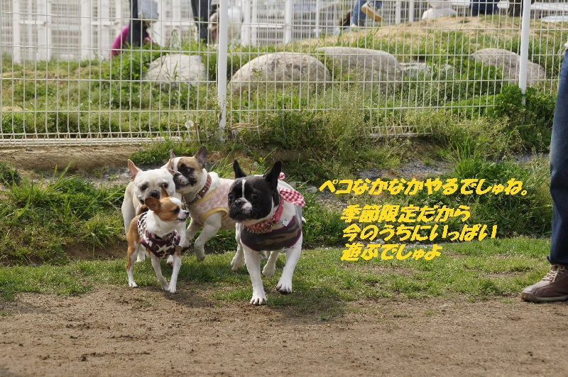 8_20110506093410.jpg