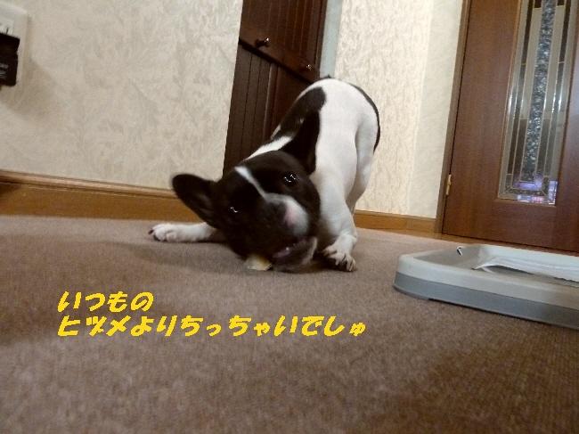 9_20110423085826.jpg