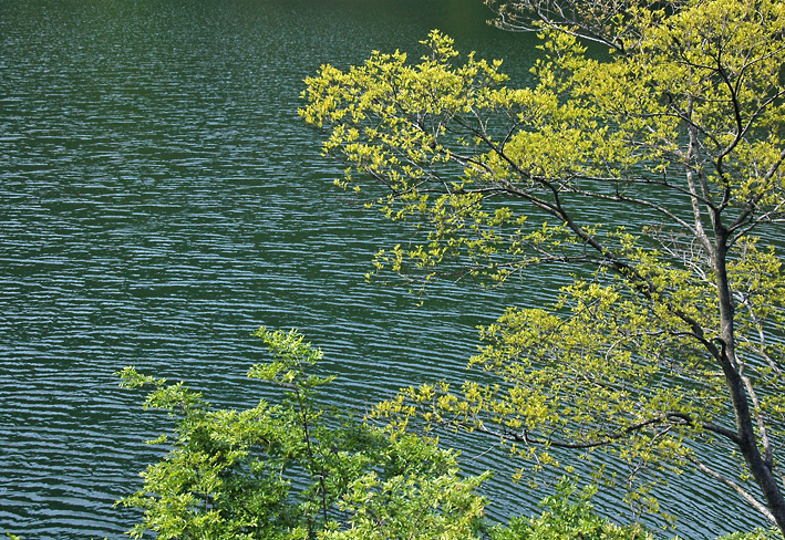 DSC_天ヶ瀬ダム湖06