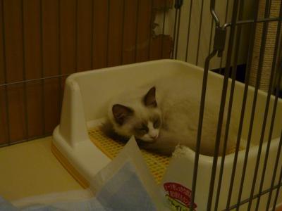 トイレの猫様