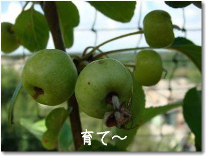 terrazza mela