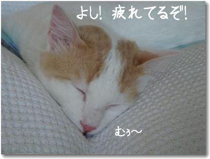 zukko dorme