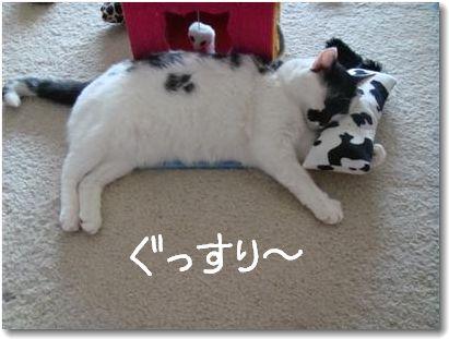 goma pillow3