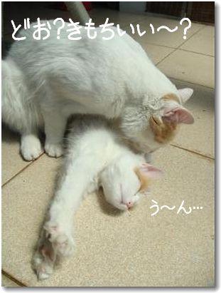 zuppi kiss2