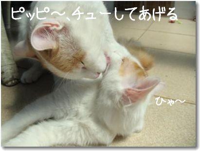 zuppi kiss1