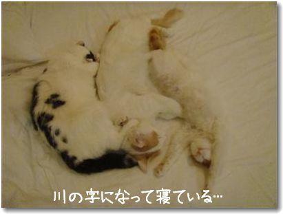 sleeping 3 cats