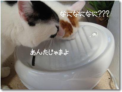 lucky kitty6