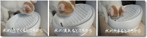 lucky kitty1 (Custom) (Custom)