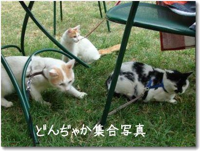 3 gatti passeggiata