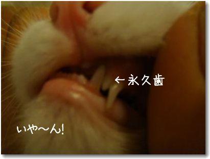 doppi denti
