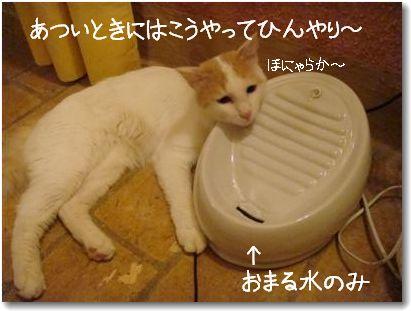 zup acqua