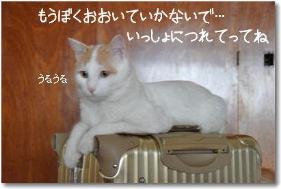 zukko suitcase