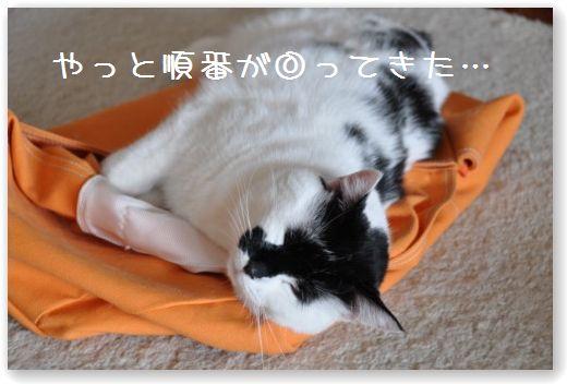 goma bag
