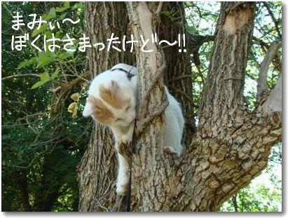 albero1_20090829165259.jpg