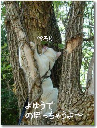 albero2_20090829165259.jpg