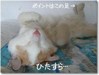 bakusui2.jpg