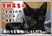chi_20090731181244.jpg