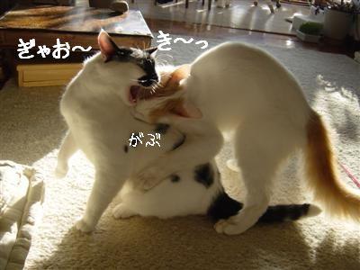 combattimento2.jpg