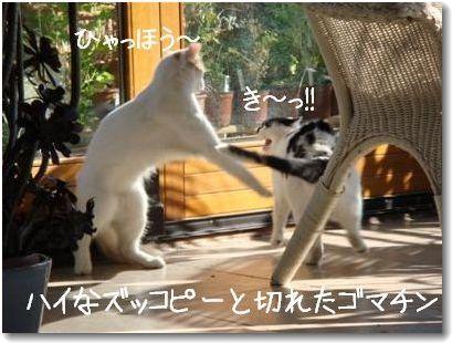 gomazu_20090615032634.jpg