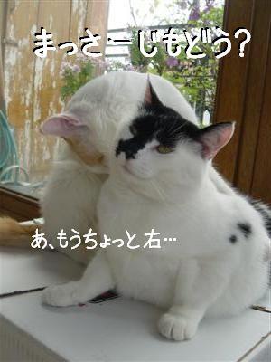 hako5.jpg