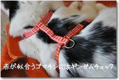 harness2.jpg