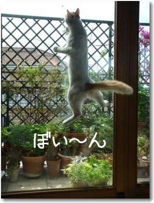 jump4-.jpg