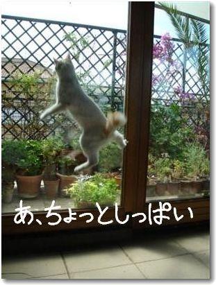 jump6-.jpg