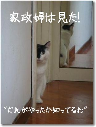 kaseifu1.jpg