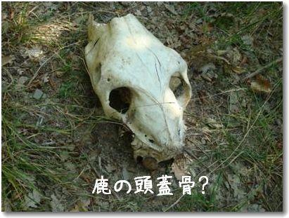 osso.jpg