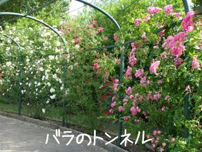 rosario2.jpg