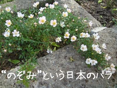 rosario6.jpg