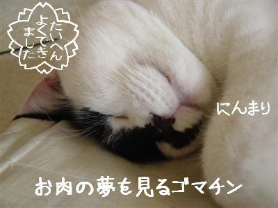 sauro3.jpg