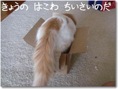 scatola1.jpg