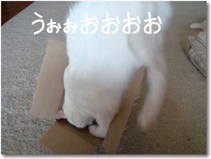 scatola2.jpg