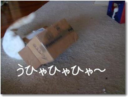 scatola4.jpg
