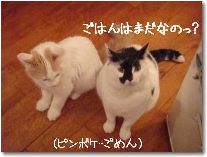 seikurabe2-_20090729001745.jpg
