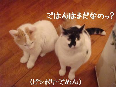 seikurabe2.jpg