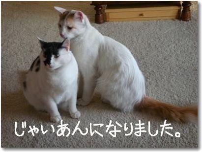 seikurabe4-.jpg