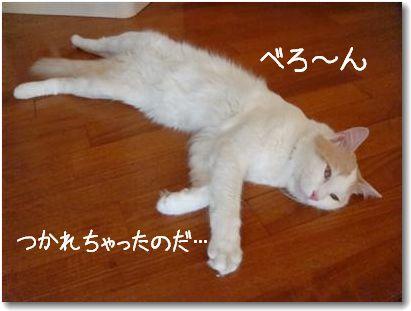 stanco1.jpg