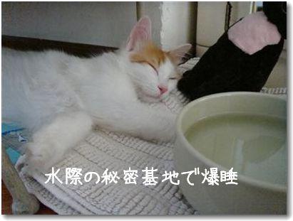 stanco2.jpg