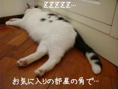 stanco3.jpg