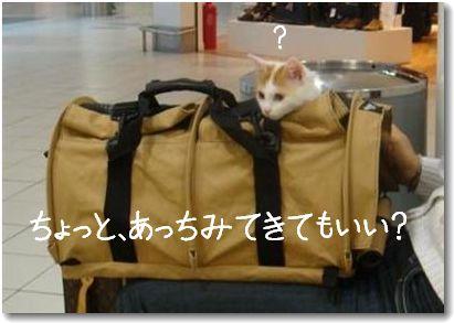 travel6.jpg