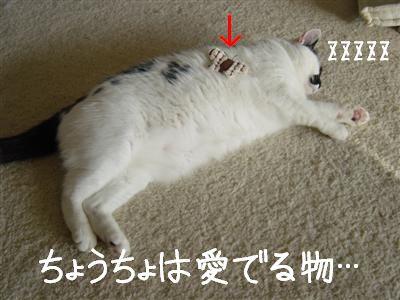 zoo7.jpg