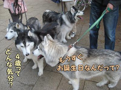 4ハスキーズ